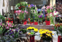 moustakas flowers store 3